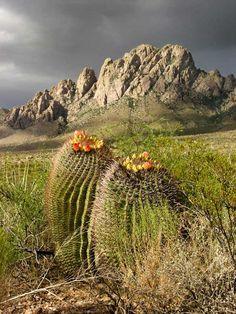 Organ Mountains Desert Peaks, near Las Cruces, New Mexico New Mexico Usa, New Mexico Homes, Mexico Cactus, Desert Mountains, Southwest Usa, Mountain Photos, New Mexican, Land Of Enchantment, Desert Plants