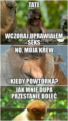 Polish Memes, Everything And Nothing, Adventure Awaits, Humor, Funny, Rage, Cheer, Ha Ha, Funny Humor