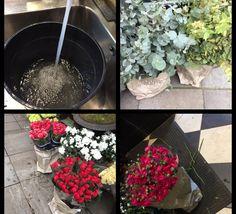 10.11.17 Satte roser og ulike eucalyptus i nytt/ rent, mye lunket/ varmt vann og plasserte poser utenfor så bøttene ble dekt til