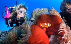 This World Heritage Site is the planet's largest protected marine area