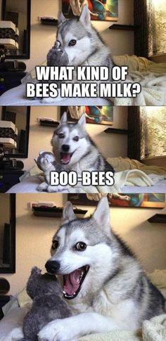 Pun Husky Just Can't Help It