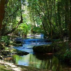 【hajime0609】さんのInstagramをピンしています。 《#nature #naturephotography #creek #river #forest #reflection #sunshine #sunlight #light #shadow #beautiful #fantastic #fancy #landscape #landscapephotography #photo #photography #camera #自然 #川 #木漏れ日 #反射 #綺麗 #森 #散歩 #stroll #カメラ #カメラ好きな人と繋がりたい #写真撮ってる人と繋がりたい #写真好きな人と繋がりたい》