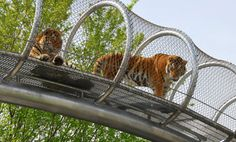 Zoos of the future are breaking down the enclosure walls