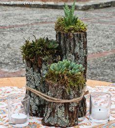 Succulent Plant Holders