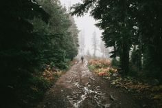 hannahkemp:  Old Forest Roads//Oregon October 2016