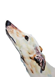 Hey, I found this really awesome Etsy listing at https://www.etsy.com/listing/177545790/greyhound-silly-art-print-size-8x12-inch