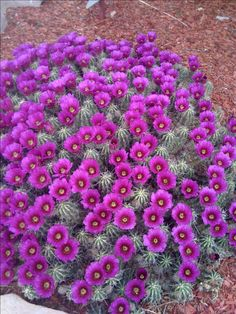 desert plants - Google Search