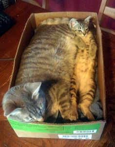 there is something about cats and boxes...