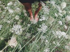 Surrounded by Queen Anne's Lace