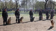 Video about Guard dogs - gendarmes training demonstration. Video of attention, fierce, 1080 - 69383054 Stock Image, Training, Dogs, Animals, Animales, Animaux, Fitness Workouts, Gym, Animal Memes