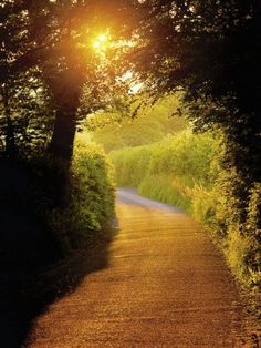 Sunlit Country Lane, Devon, England. Can  you picture going for a walk, quiet, reflecting, peace