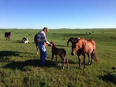 Dad and new foals on Grace's lands. Photo by Joan Wink http://dawnwink.wordpress.com/2013/04/07/meadowlark-publication-announcement/