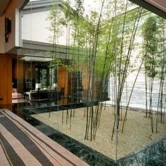 Different bamboo garden design ideas to decorate patio, living room and outdoor landscape. Indoor Courtyard, Modern Courtyard, Courtyard Design, Internal Courtyard, Front Courtyard, Patio Design, Modern Landscaping, Backyard Landscaping, Landscaping Ideas