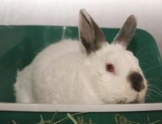 If you are considering taking a pet rabbit into your home, here are a few things you need to know.