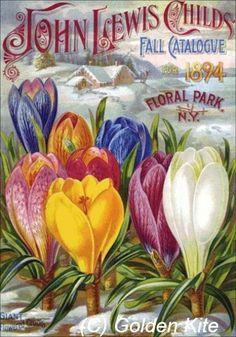 Flower Catalog 1894