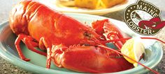 Live Lobster For Sale Online Lobster For Sale, Live Maine Lobster, Live Lobster, Lobster Boat, Lobster Tails, Barn Cafe, 1 Live