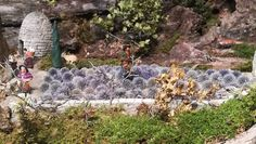 Un champ de lavande, Jean-Félix a utlisé des chardons, le rendu est vraiment très beau.