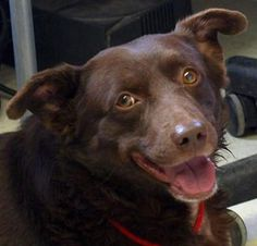 Adoptable Dog of the Day: Bear in Colorado