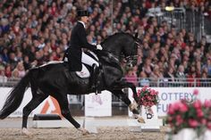 Totilas. Best dressage horse in the world. He's so gorgeous!