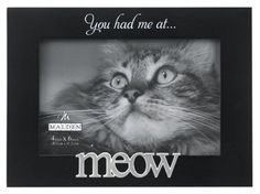 cat decor wall - Malden International Designs Expressions You Had Me at Meow Black Wood Picture Frame, Black Modern Picture Frames, Modern Pictures, Picture On Wood, Funny Cat Photos, Collage Frames, Wood Frames, Cat Decor, Dog Shirt, Hades