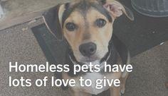 N.J. pets in need: Aug. 29, 2016