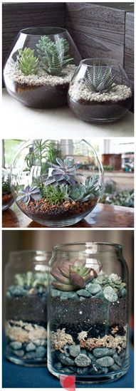 I'm making terrariums today!
