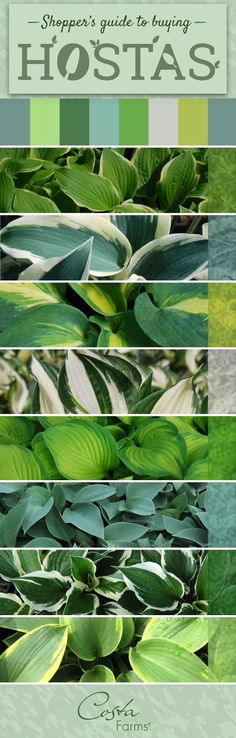 There are so many beautiful, easy-care hostas available. Get tips for selecting the best hostas for your yard, as well as tips for selecting the best hosta plants at your local garden center! - The Garden Center Outdoor Landscaping, Outdoor Plants, Front Yard Landscaping, Outdoor Gardens, Backyard Patio, Backyard Ideas, Small Gardens, Plants For Landscaping, Front Yard Plants