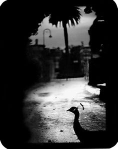 Giacomo Brunelli and his unique form of 'animal-focused street photography' on Wayne Ford blog