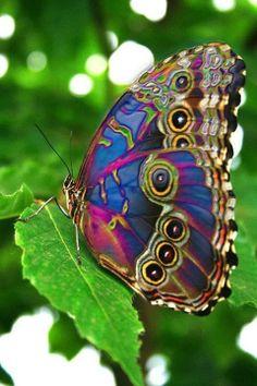 O segredo é não correr atrás das borboletas... É cuidar do jardim para que elas venham até você. Mario Quintana.