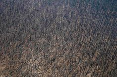 Charred trees are seen in the Gila National Forest as the result of a forest fire in the Whitewater-Baldy Complex in New Mexico.
