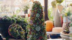 DIY Succulent Christmas Tree.