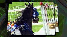 Road to Winning Wayne County, Harness Racing, County Fair, Horse Racing, Ohio, Horses, Watch, Animals, Image
