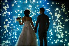 Looking for a wedding venue? Amazing photos of a recent wedding here at the Aquarium: A Vancouver Aquarium Wedding // Cindy & JJ // Vancouver Wedding Photographers