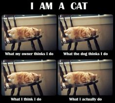 oh, i am quickly becoming even more of a crazy-cat lady. but i think this is pretty freakin' funny. and true.