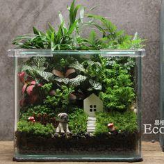 "Ecoecho苔藓微景观苔藓瓶生态瓶创意绿植造景方缸""盼"""