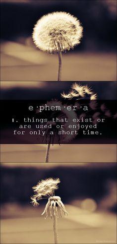 unique words - ephemera. Click photo for SOURCE of the photo.