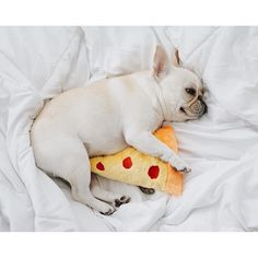 A French Bulldog and Pizza, what more do you really need? @piggyandpolly on instagram.