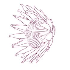 Protea Tattoo Concept by Michelle Lauren van den Berg, via Behance. Art Painting, Drawings, Linocut Prints, Fabric Painting, Art Drawings Sketches, Protea Art, Drawing Sketches, Flower Drawing, Art
