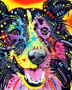 Sheltie Canvas Print / Canvas Art by Dean Russo