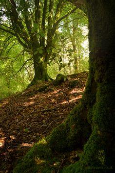Under beechwood trees