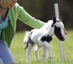 Tiny pony!