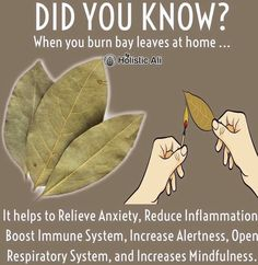 Do you burn bay leaves❓❓❓ Health And Fitness Articles, Good Health Tips, Health And Beauty Tips, Health And Nutrition, Home Health Remedies, Natural Health Remedies, Healing Herbs, Natural Healing, Health And Wellbeing