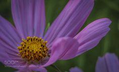Purple Flower Power by HeatherACody. @go4fotos