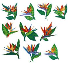 Images For > Bird Of Paradise Flower Tattoo