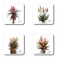 These coasters feature beautiful, bright aloe photographs - one of the gems of South Africa's plant kingdom. South African Homes, South African Art, South African Flowers, African Home Decor, Making Waves, Landscape Photography, Coasters, Illustration Art, Canvas Prints