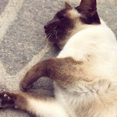 Jade 🦋 #mygreatcat #my_loving_pet #cat #gatto #catoftheday #catsofinstagram #catstagram #gatti #instacat #instacat_meows #bestmeow #topcatphoto #miao #catlover #gatto #catoftheday #katze #gato #chat #猫  #neko #猫好き #Exellent_Cats #子猫 #プッシーキャット #ニャー #甘い #愛猫