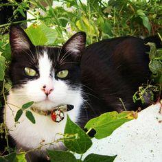 La guía definitiva para cuidar a mi gatita antes, durante y después de la esterilización. #cat #kitty