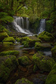 Madishy: Falls & Ferns by Jamie Richey