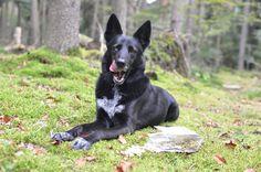 Hundekekse von Hundekeks&Co im Test