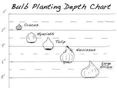 Pine Garden, Garden Pots, Vegetable Garden, Garden Ideas, Daffodils, Tulips, Dutch Iris, Planting Bulbs, Plant Species